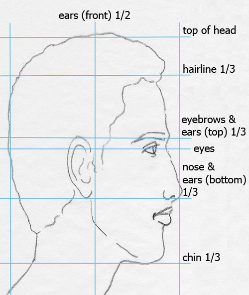 face profile drawing with proportions labeled
